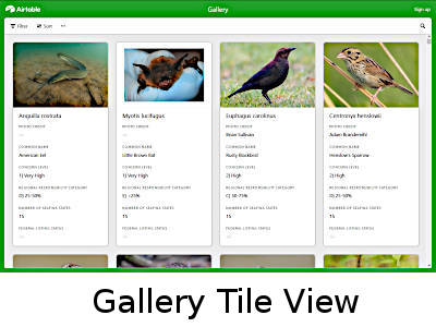 Gallery Tile View